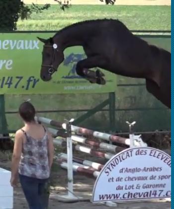 Retour sur les Journées d'élevage de Nérac