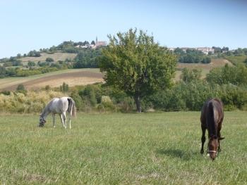 Arrière saison ensoleillée à La Téoulère.